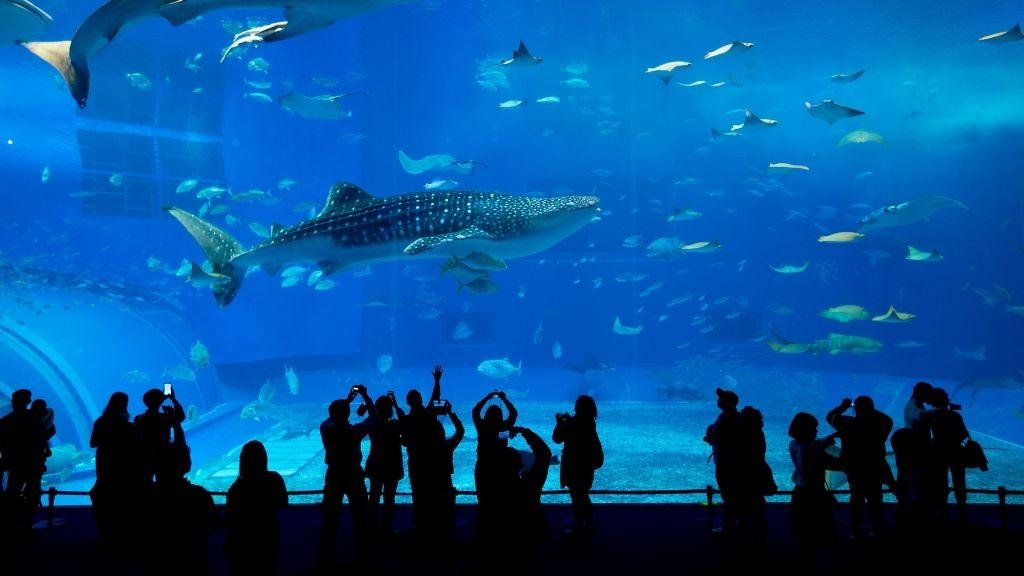 Cute date ideas - aquarium