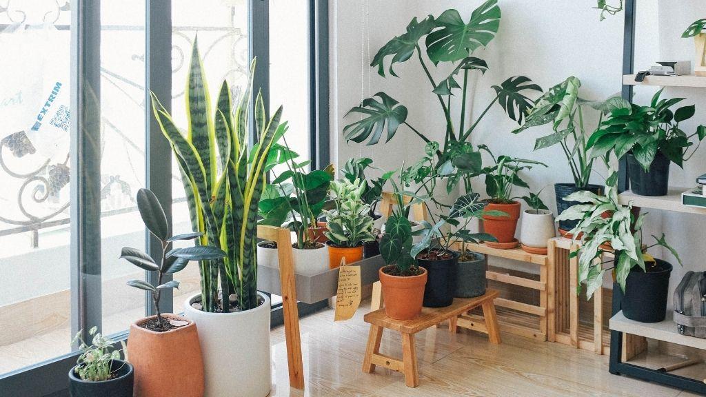 Easy DIY tips - plants